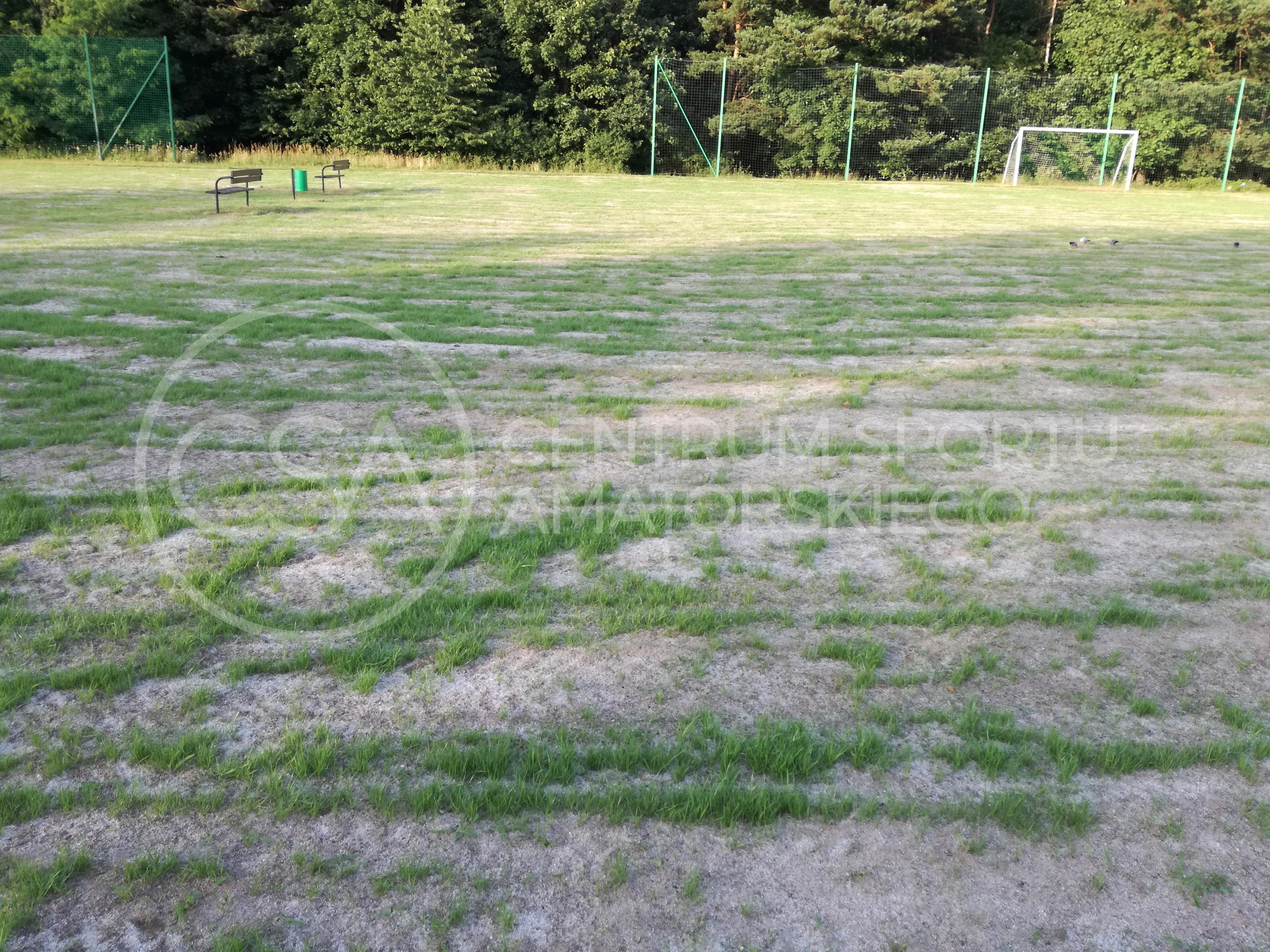 Pierwsze kiełki trawy - lipiec 17'